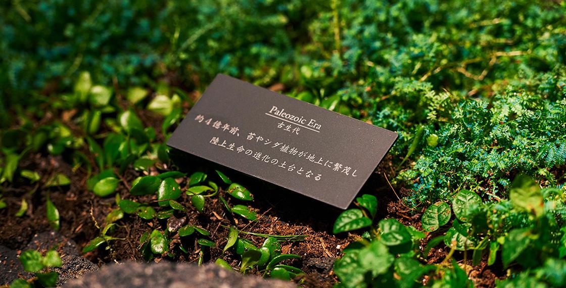 シダ植物を始め、多様な植物の種類を表情豊かに配置したGROOVE Xエントランスの壁面緑化。その植生をよく見ると、古生代から中生代、新生代と植物の進化の過程を辿っている。